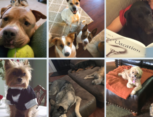 35 North Showcases Our Four-Legged Friends on National Rescue Dog Day!
