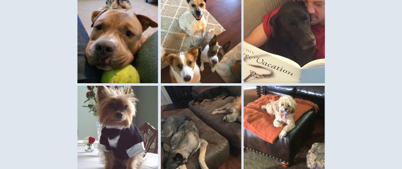 35 North's Rescue Dogs